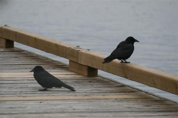 My two friends in Pender harbor.