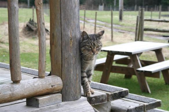 Charlie, the tabby , who came to visit us every time we were there, after all, we had some very nice cat food!!!