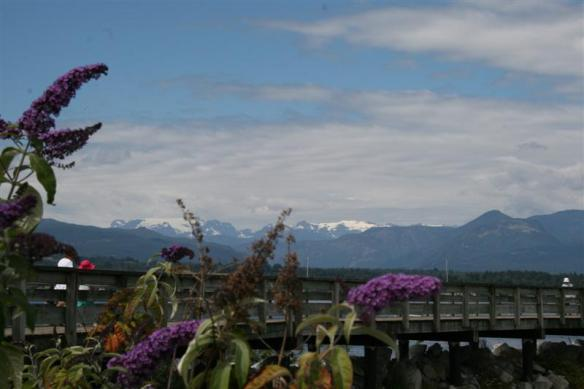 View from the marina, with the Comox glacier in the background.
