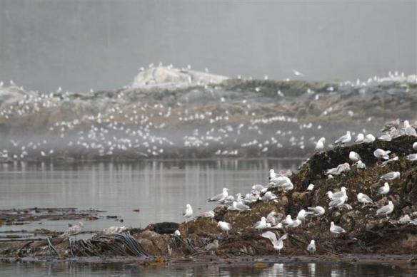 Ridge Islets, very , very busy bird population!!!