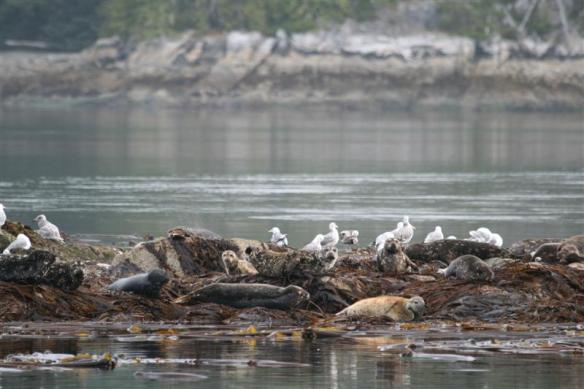 The seals and birds get along very well, there seems to be enough room for everyone.