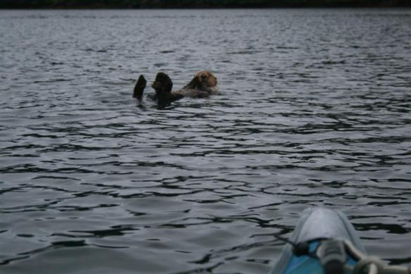 Dixie Cove otter.
