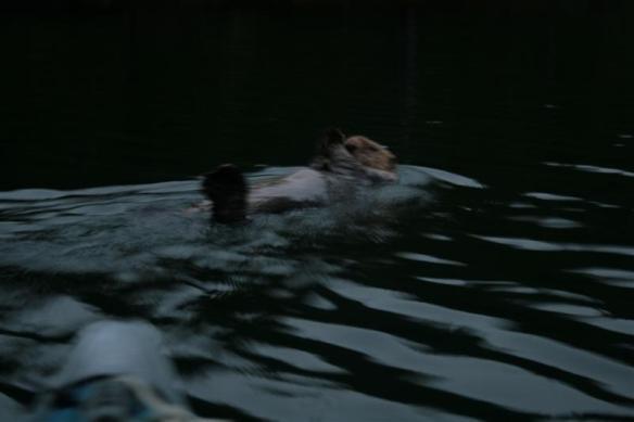 Dixie Cove otter