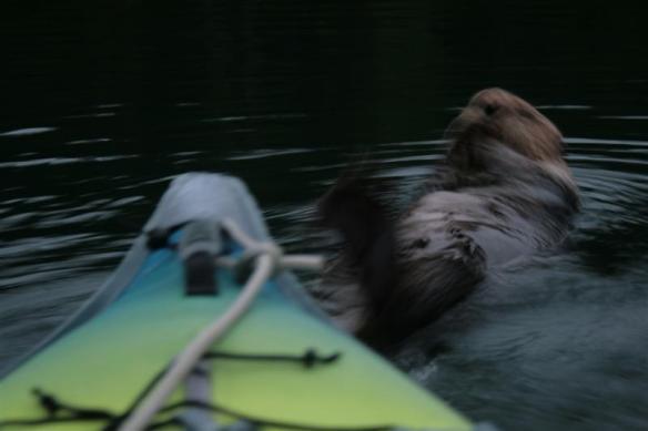 my otter buddy