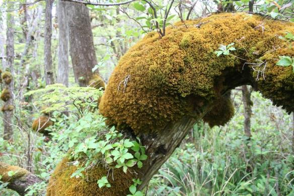 Wonderful ecosystem  on the trail to Laury beach