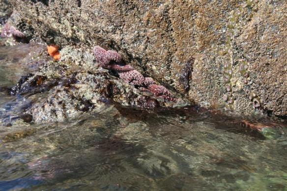 Beautiful colors of the sea stars.