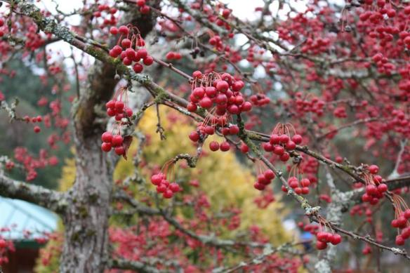 Bright winter colors, clusters of red berries.