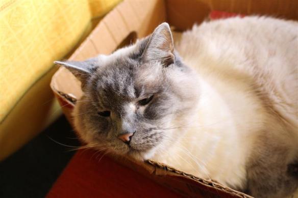 Peaches in her box!!!!  Happy kitten!!!!