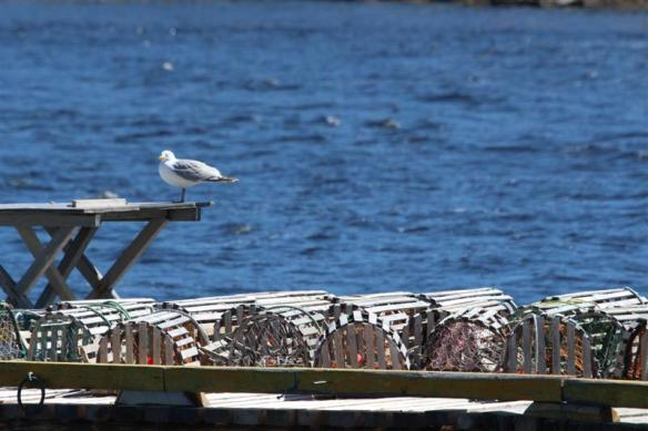Lobster traps, gulls, a very back east sight!!
