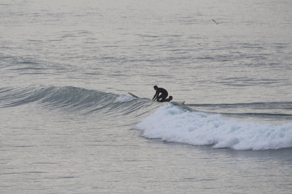surfers,all along the shore
