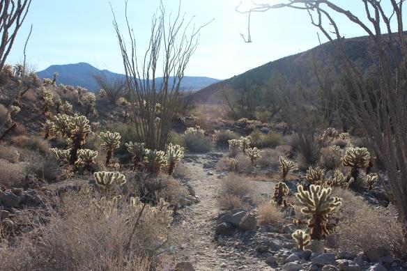 Cactus loop trail.