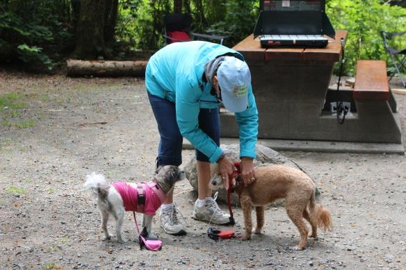Ineke getting the doggies ready