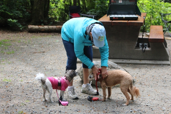 Ineke getting the doggies ready