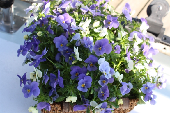 violets on the boat