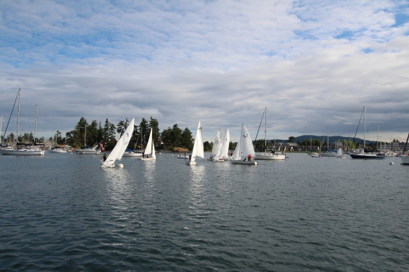 Sailing school busy  out there!!!