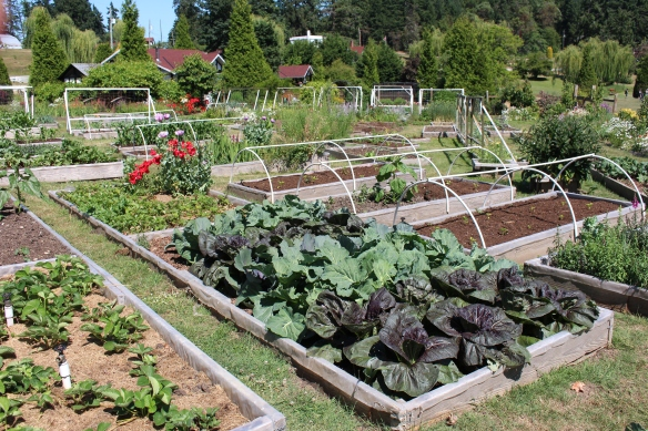 All raised beds, i love to grow veggies like that, so much easier to manage.