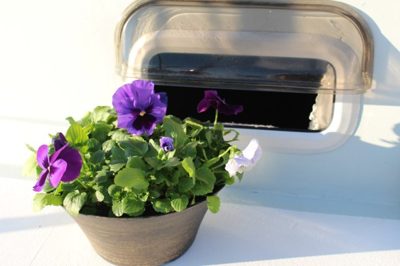 As soon as i could, i bought pansies, my mom used to love these flowers, i grow them every year.