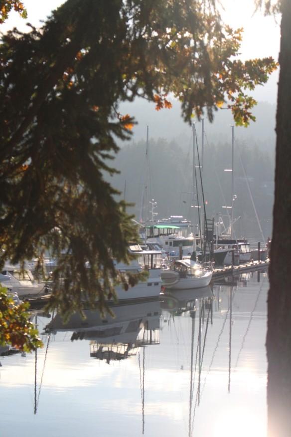 View at the marina , Curtsy at the main dock.