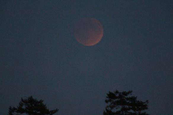 Harvest moon, blood moon.