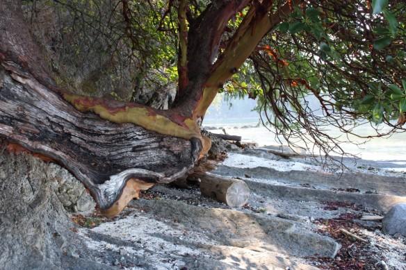 Slowly eroding shore line.