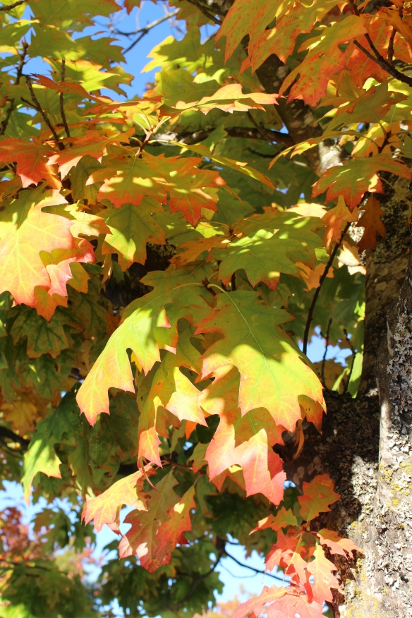 Nothing but crisp, beautiful sunny days, the fall colors of the trees are just amazing this year, as we have had not much rain yet and no strong winds.