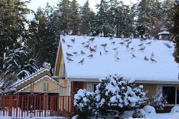 feb-snow-and-ice-and-ucluelet-024