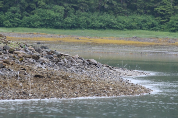 Alaska 2017 Hoonah 002