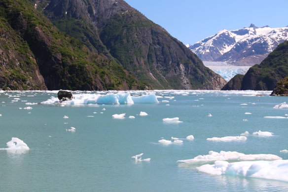 Alaska Tracy arm Taku bay 275