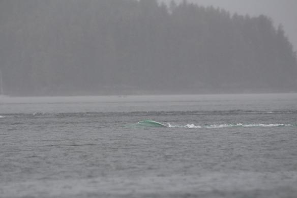Alaska Tracy arm Taku bay 313
