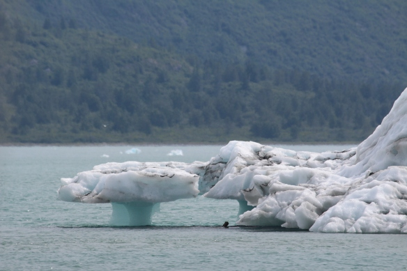 HOONAH GLACIER BAY BLUE MOUSE COVE 240