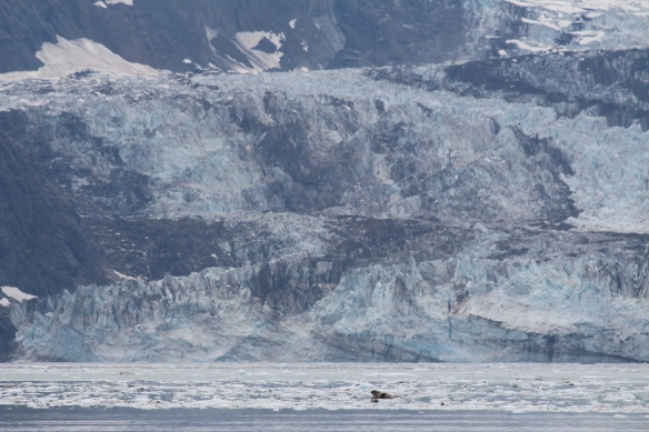 HOONAH GLACIER BAY BLUE MOUSE COVE 276